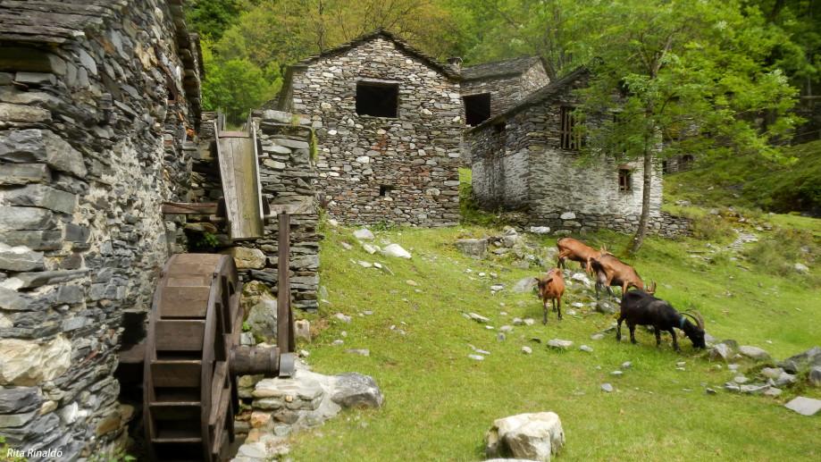 Architetture rurali