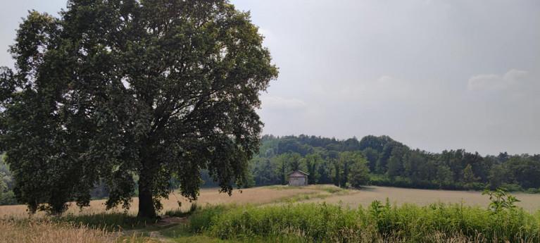 A ride through Olona Valley's history